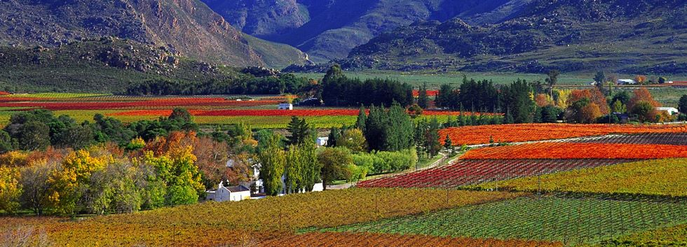 Cape-Winelands2